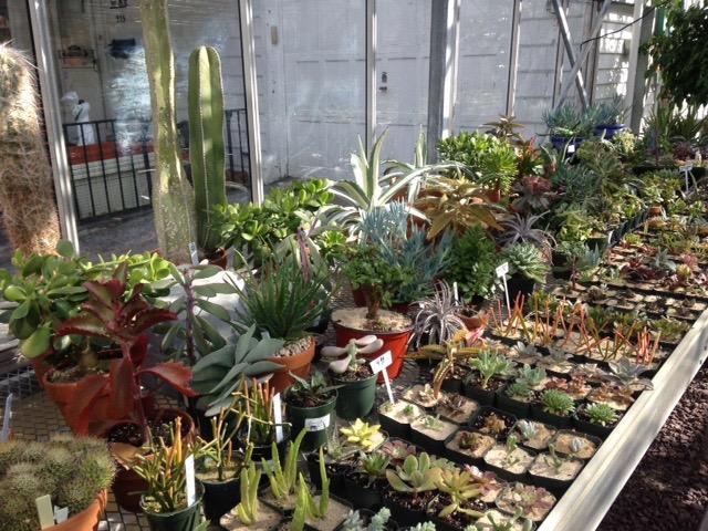 New varieties of unusualsucculents!