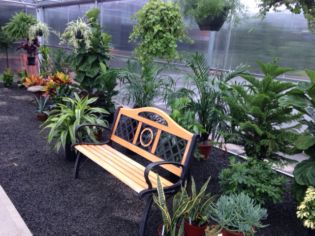 Come and enjoy our new greenhouse  and purchase a new houseplant or two for yourhome.