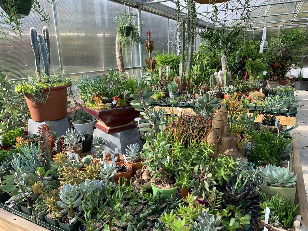 Look no further than Rose Hill Nurseries for a vast selection ofhouseplants!