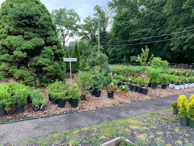 New Selection of Native Plants are here!