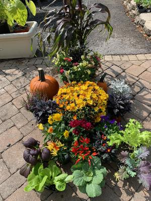 New Fall Plantings Have  Arrived at                                     Rose Hill Nurseries!