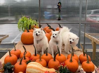 Halloween around the corner so  stop by forpumpkins!